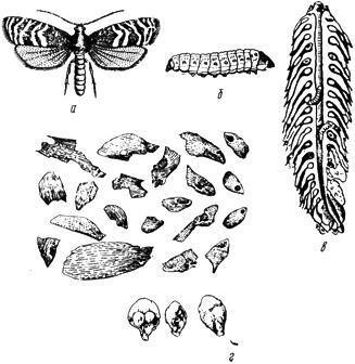 ГОСТ 28420-89 скачать. Карантин растений.